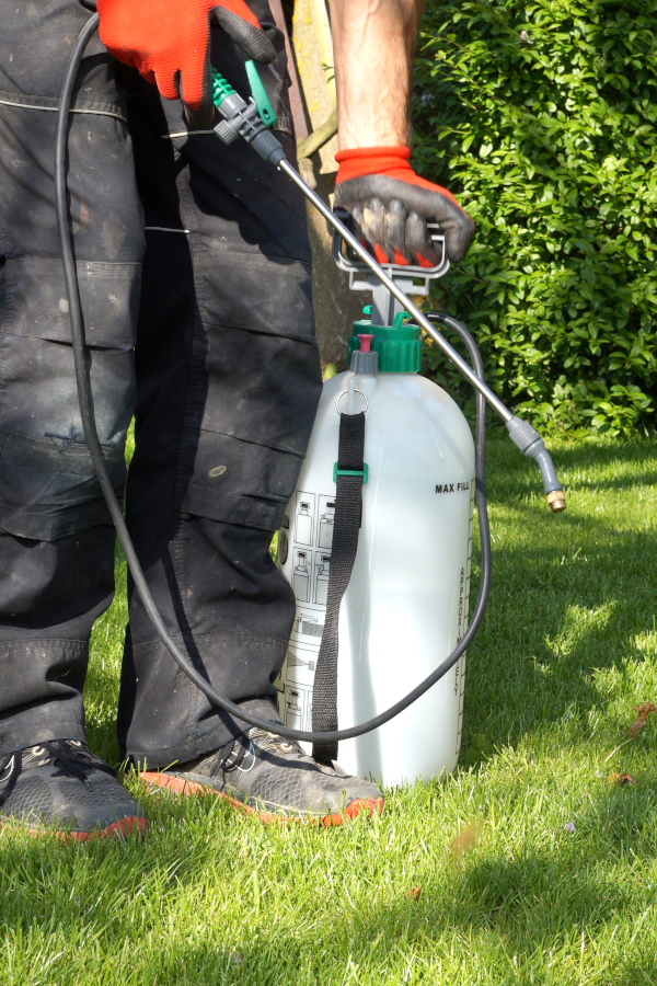 a man spraying non-toxic weed killer on plants from a manual pump sprayer.
