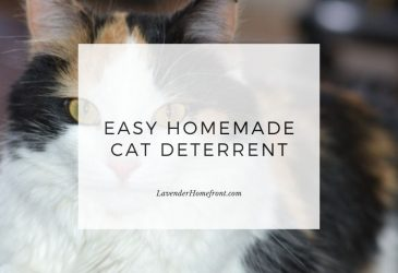 easy homemade cat deterrent main image