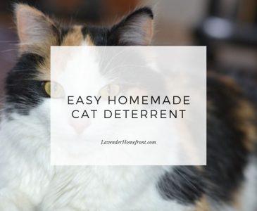 easy homemade cat deterrent main image