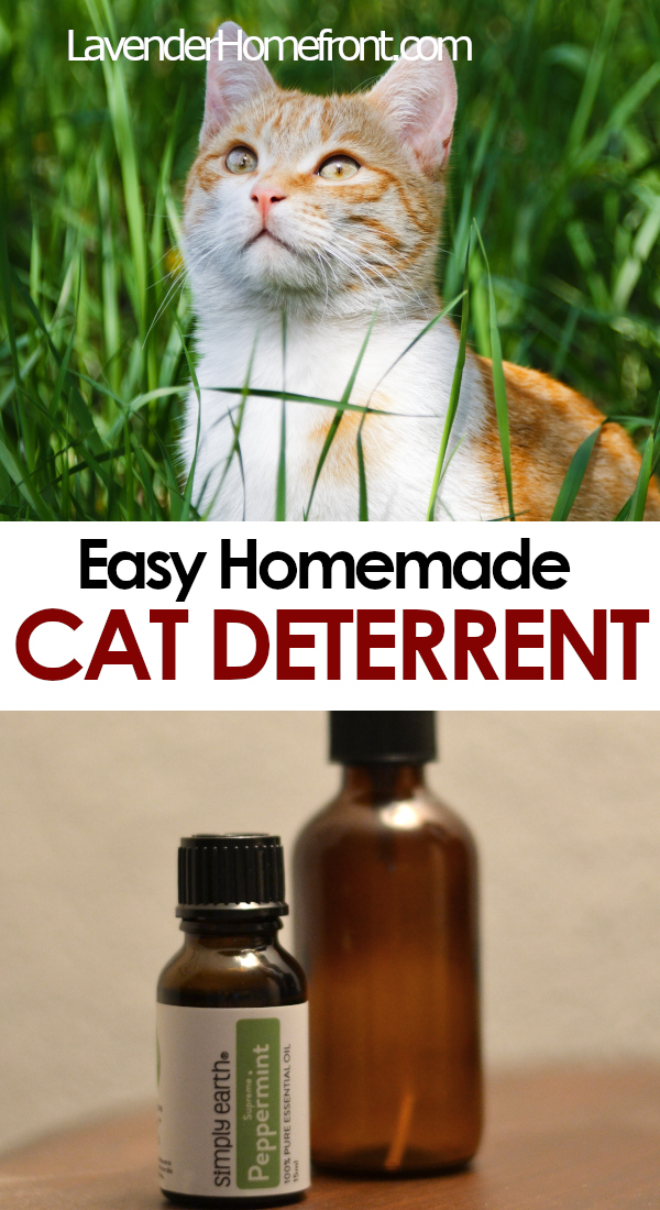 homemade cat deterrent pinnable image