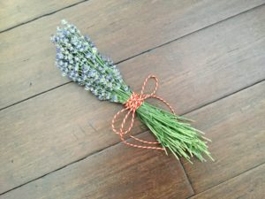 Harvesting Lavender Bunch