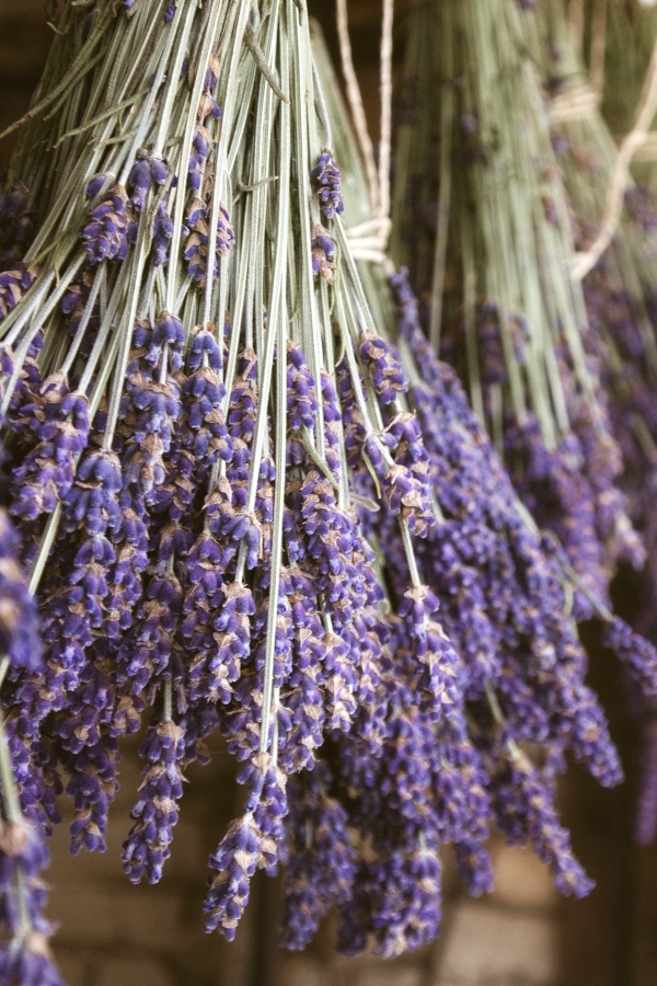 a bundle of dried lavender hanging.