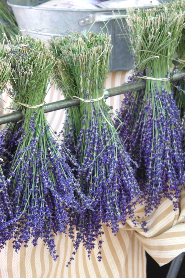 harvested lavender hanging to dry