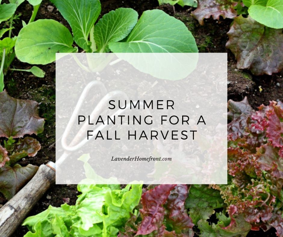 summer planting for fall harvests main image