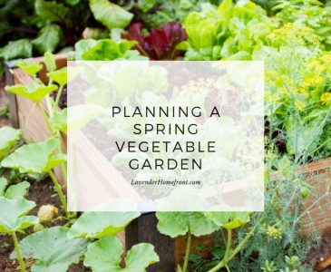 start a spring vegetable garden main image with text overlay
