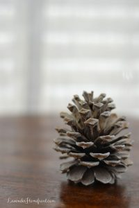 Bleaching Pinecones
