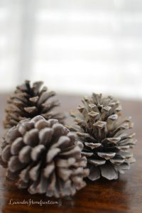 Bleaching Pinecones for Decoration