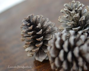 bleached pine cones sitting on a table