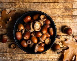 how to use acorns to decorate for fall