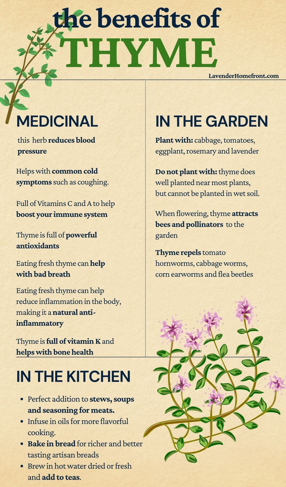 the benefits of growing thyme informative chart