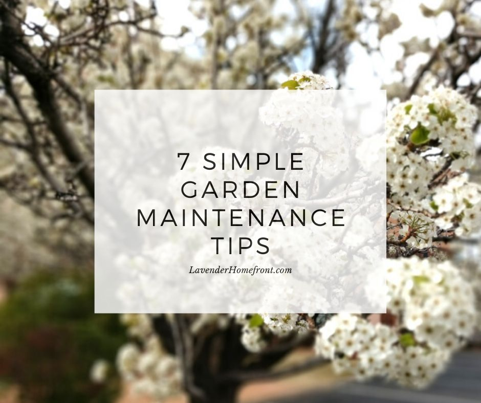 garden maintenance tips main photo