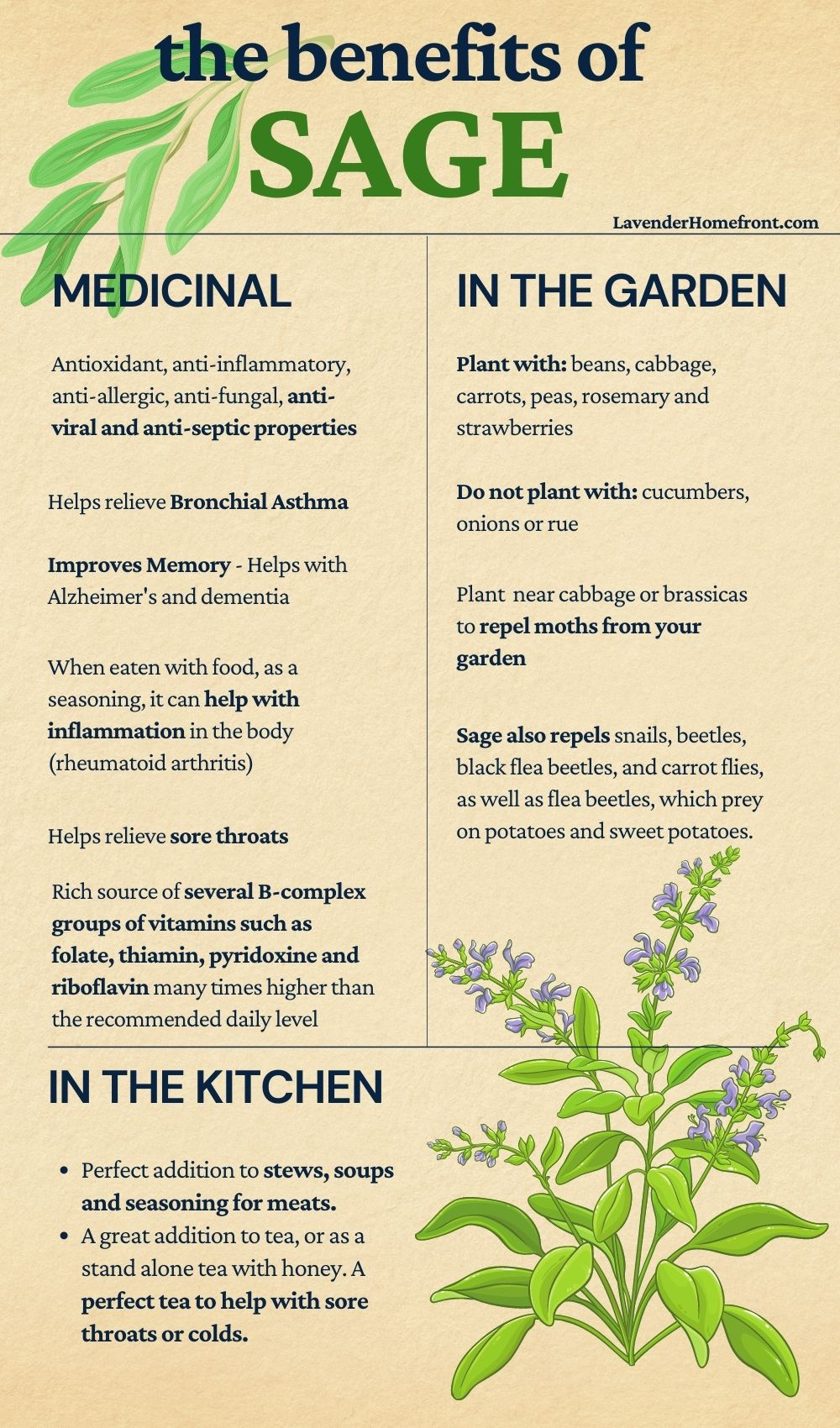 a list of the benefits of growing and using sage