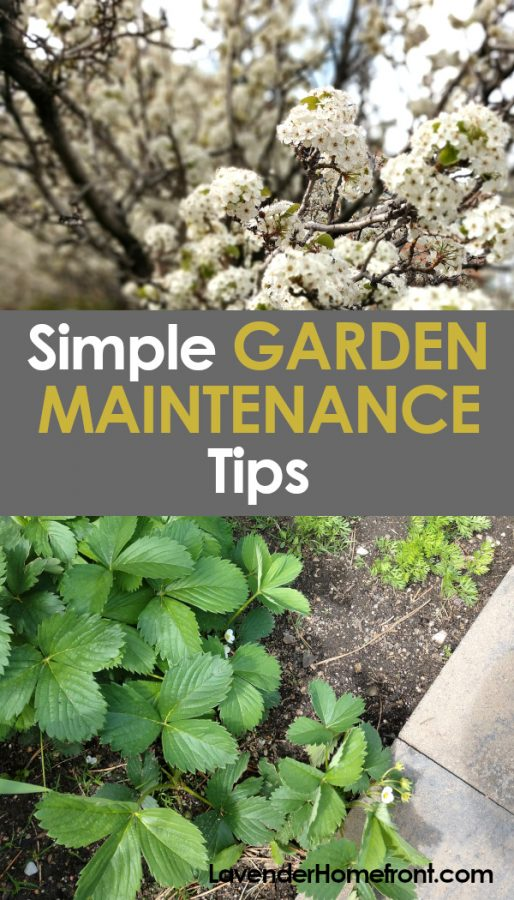 garden maintenance tips pinnable image