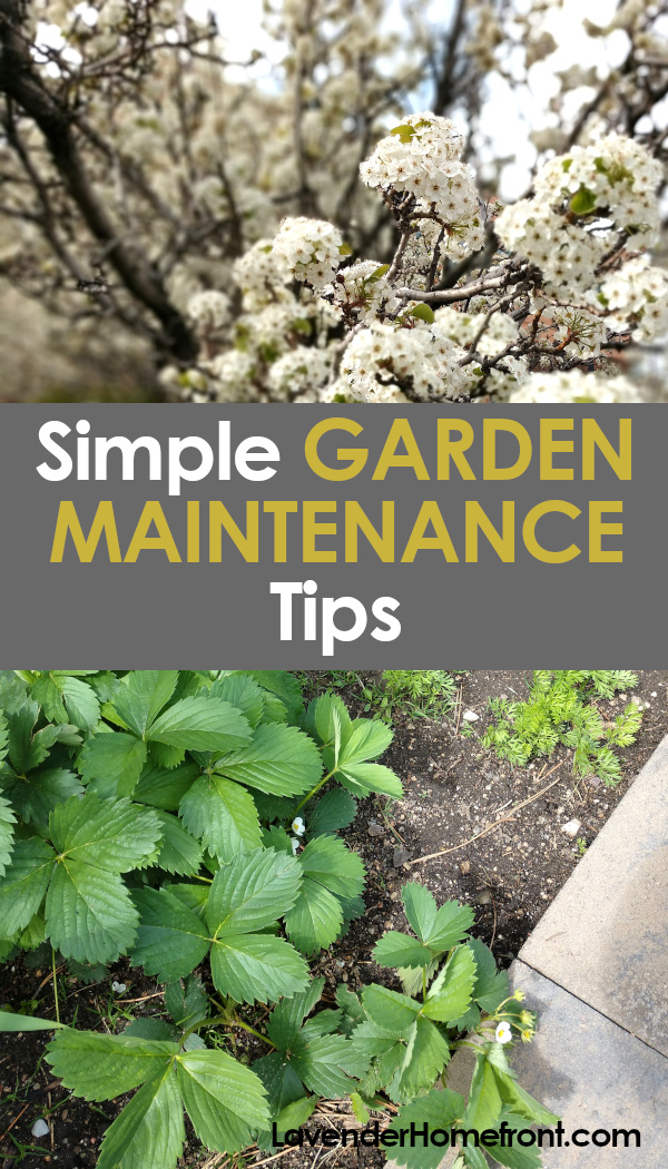 low maintenance gardening tips pinnable image.