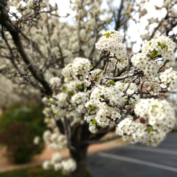 flowering tree in garden