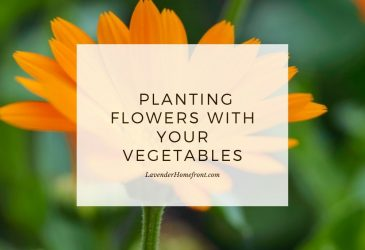 the benefits of planting flowers with your vegetables main image with text overlay.