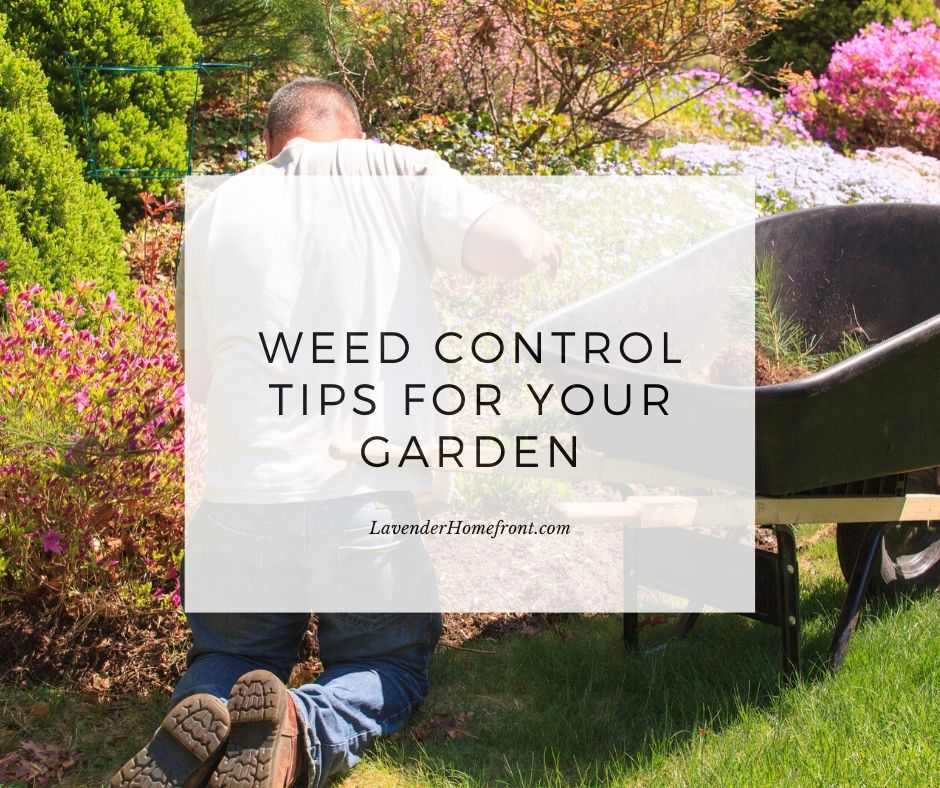 weed control tips in the garden main photo