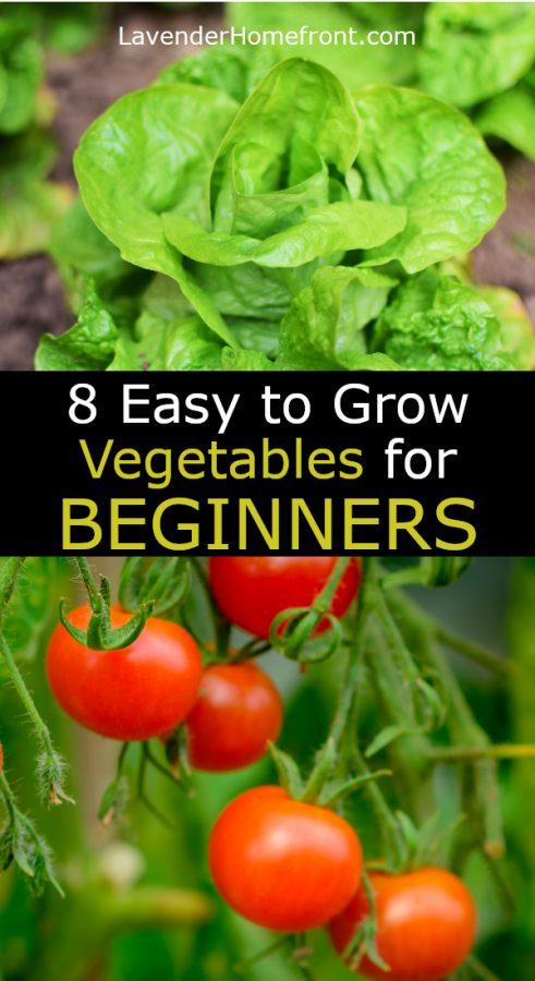 beginners vegetables pinnable image