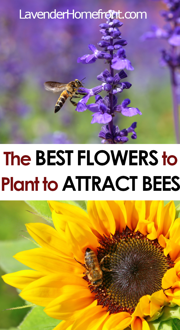 Flowers That Attract Bees To Your Garden - The Lavender ...