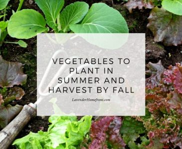 Vegetables that you can plant in the summer and harvest by fall main image with text overlay.