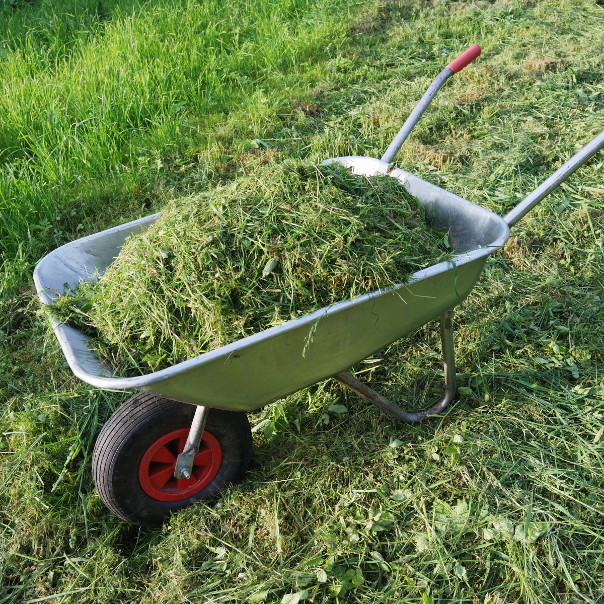 grass clippings in a wheel barrow to be added to a garden to improve soil