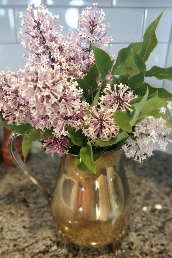blooming lilacs in a silver vase
