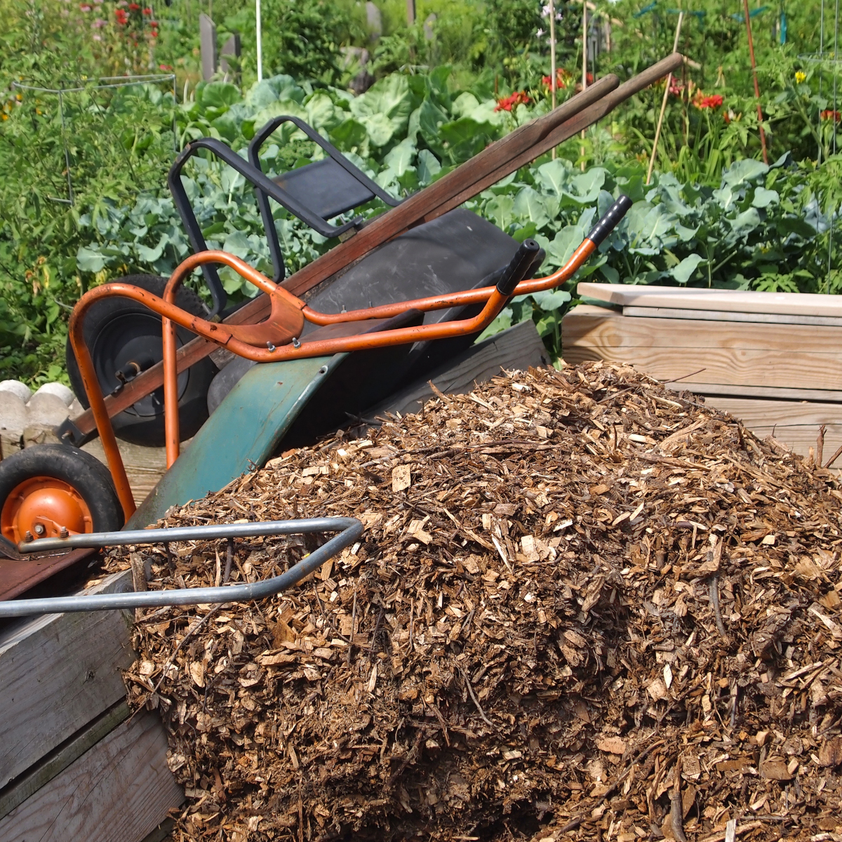 wood chips in a wheel barrow to be added to a garden