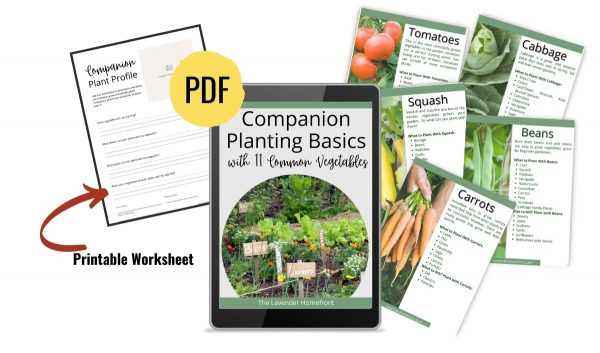 companion planting basics ebook sales photo.