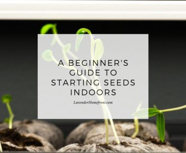 starting seeds indoors main image with text overlay