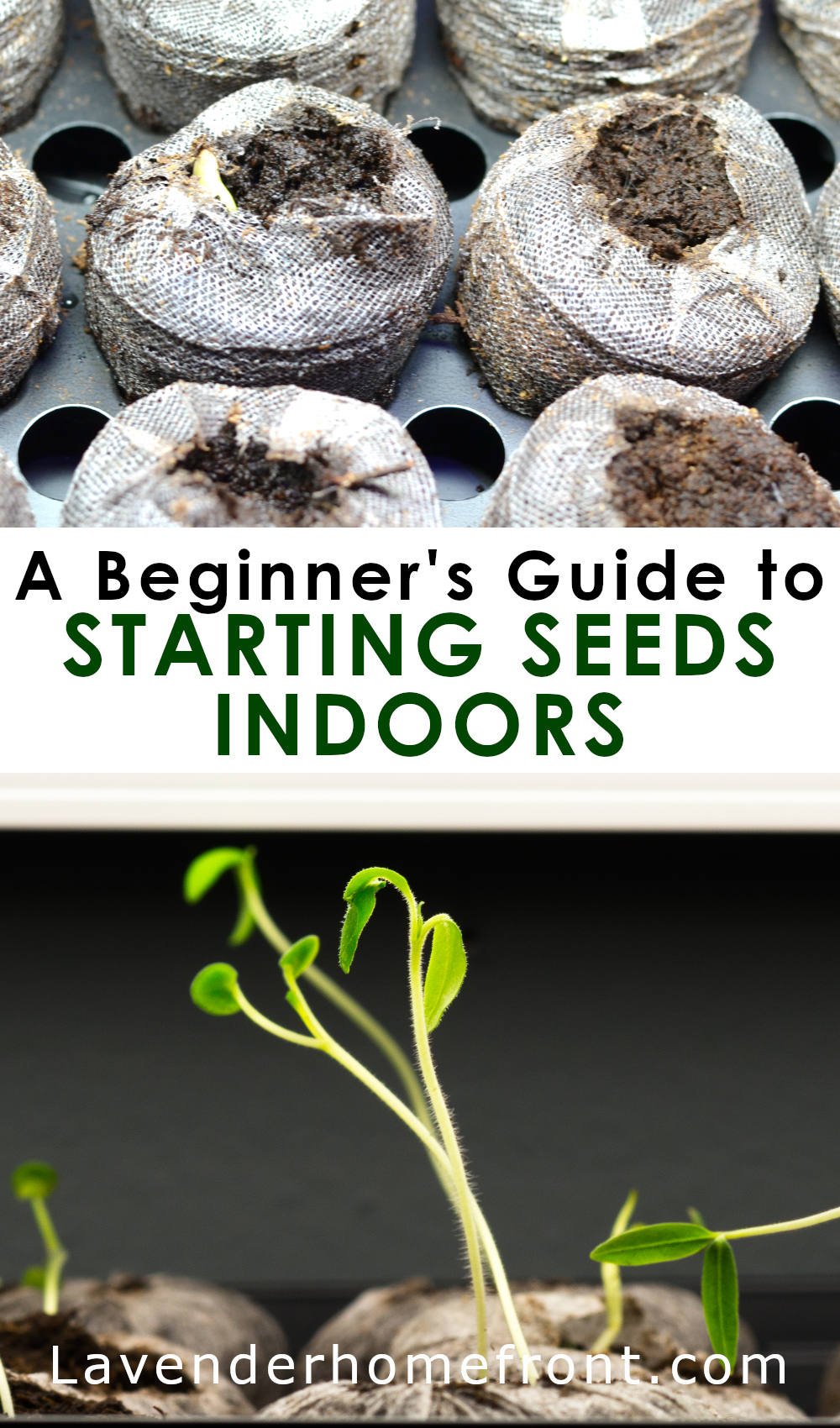 A Beginner's guide to seed starting indoors pinnable image with text overlay.
