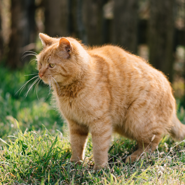 keeping your cat out of the garden with deterrents.