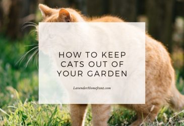 how to keep cats out of the garden naturally main image with text overlay.