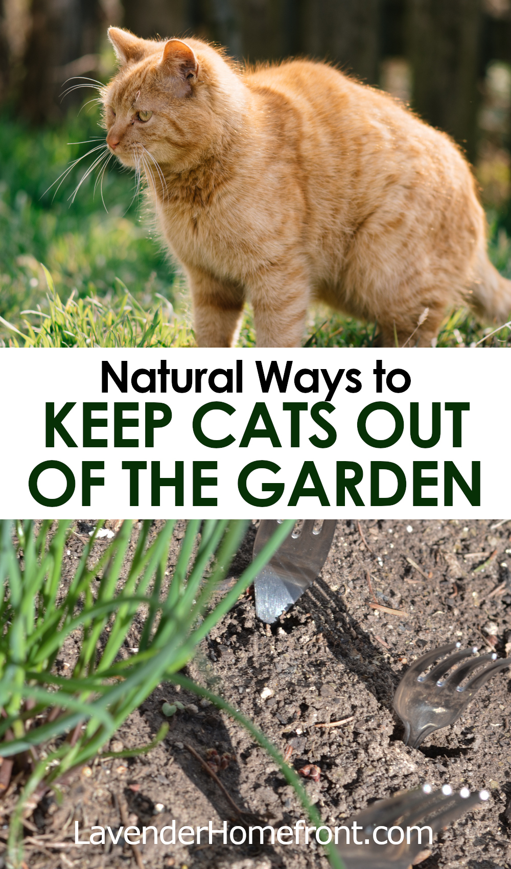 How to keep cats out of you garden naturally pinnable image.