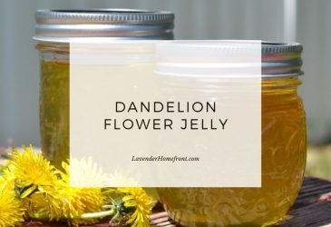 dandelion jelly recipe main image with text overlay.