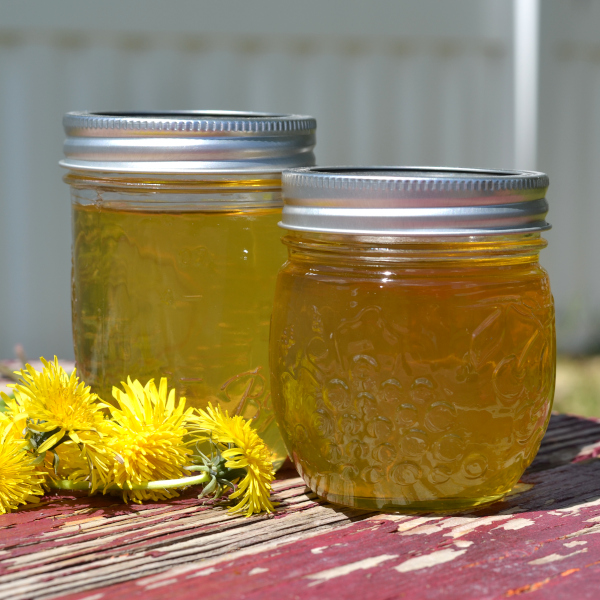 two mason jars of homemade dandelion jelly on a table.