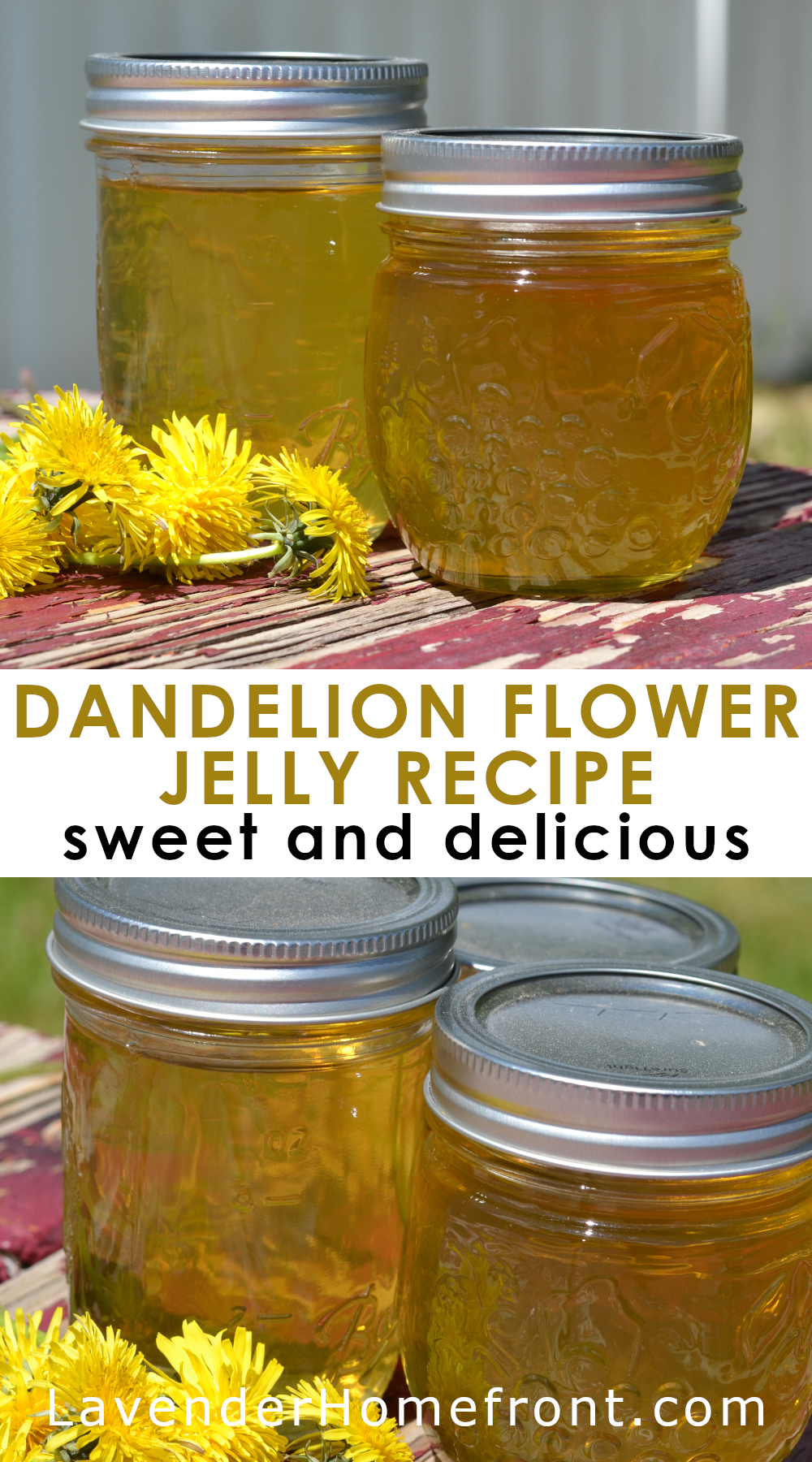 Dandelion Jelly pinnable image with text overlay.