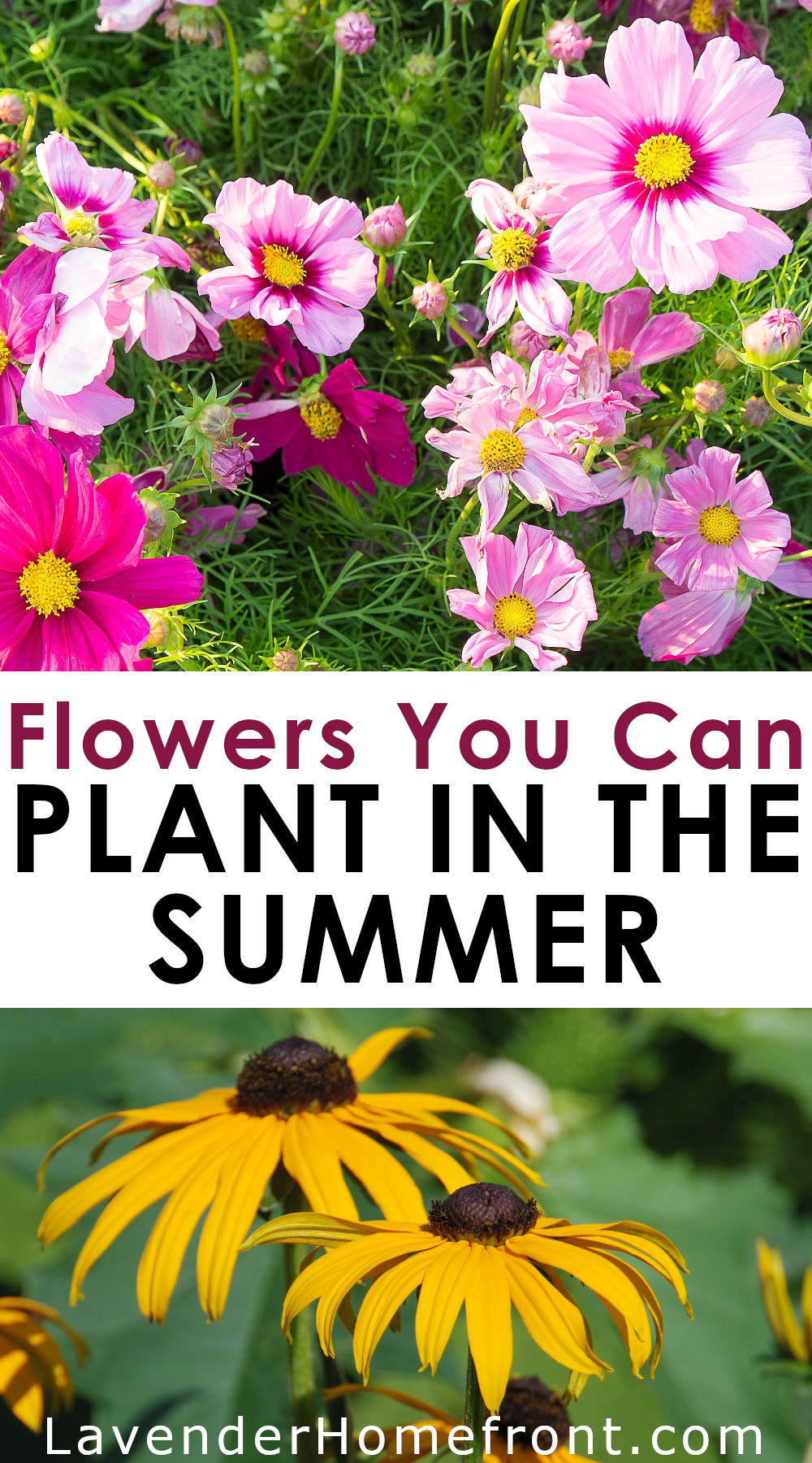 Flowers to plant in the summer and enjoy in fall pinnable image.