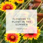 Flowers to Plant in the summer main image with text overlay.